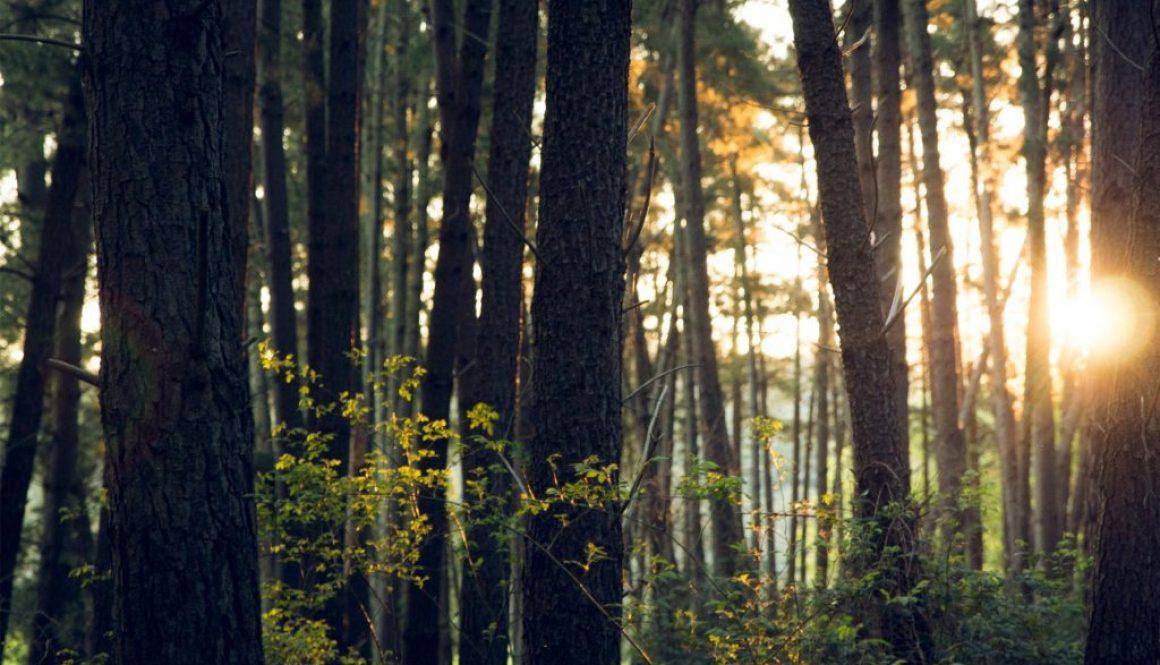 groves2